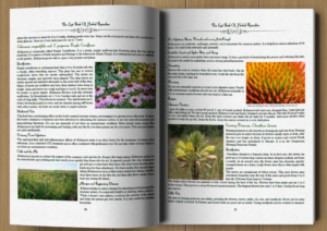 The Lost Book Of Herbal Remedies Sample Pages